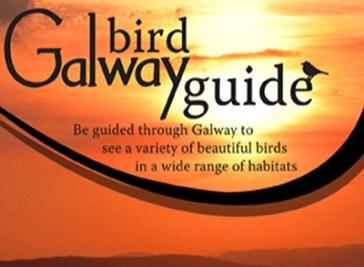 Galway Birds guide